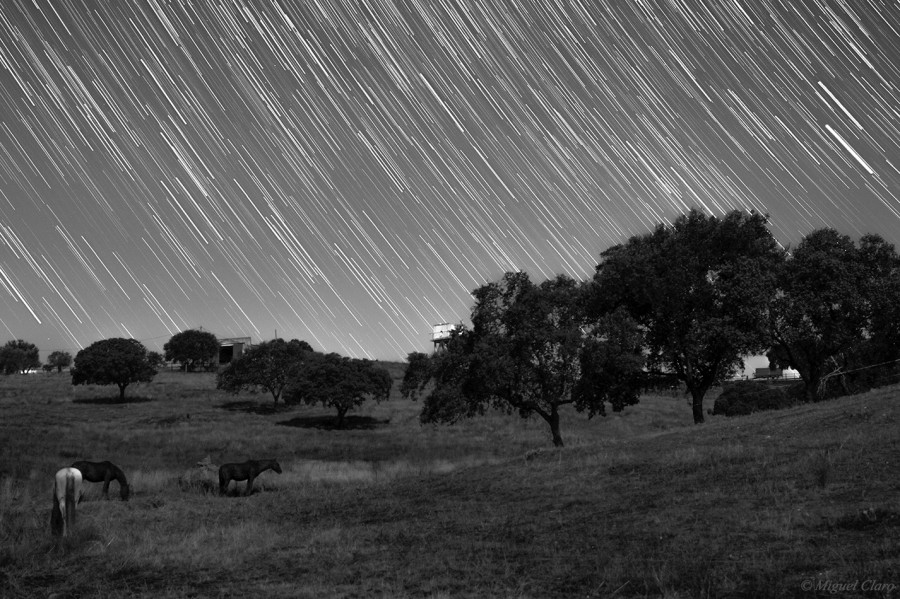 CavalosStartrails-Final-OK-BW-net