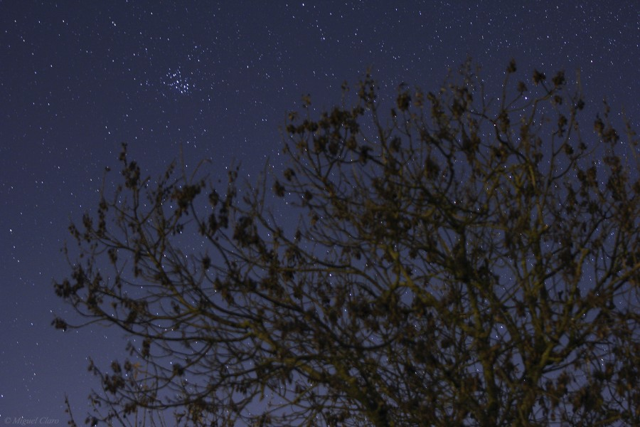 The M45 Pleiades photographed above a tree in the Monsaraz region. Portugal
