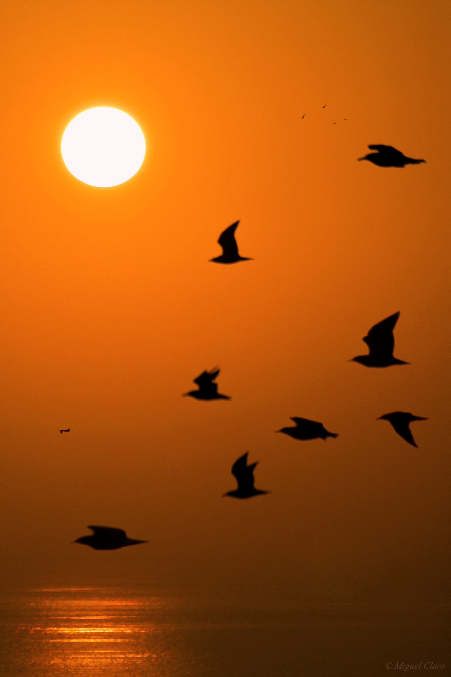 The Sunset Birds @ Astrophotography by Miguel Claro