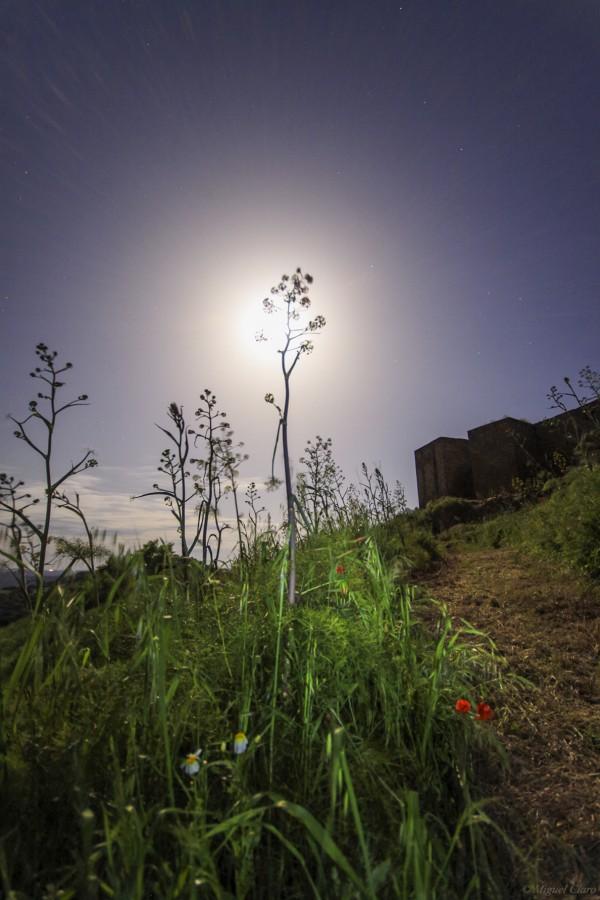 FlowerEclipseMoonNoudar-net