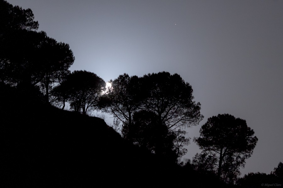 MoonEclipseBehindTheNoudarTrees-net