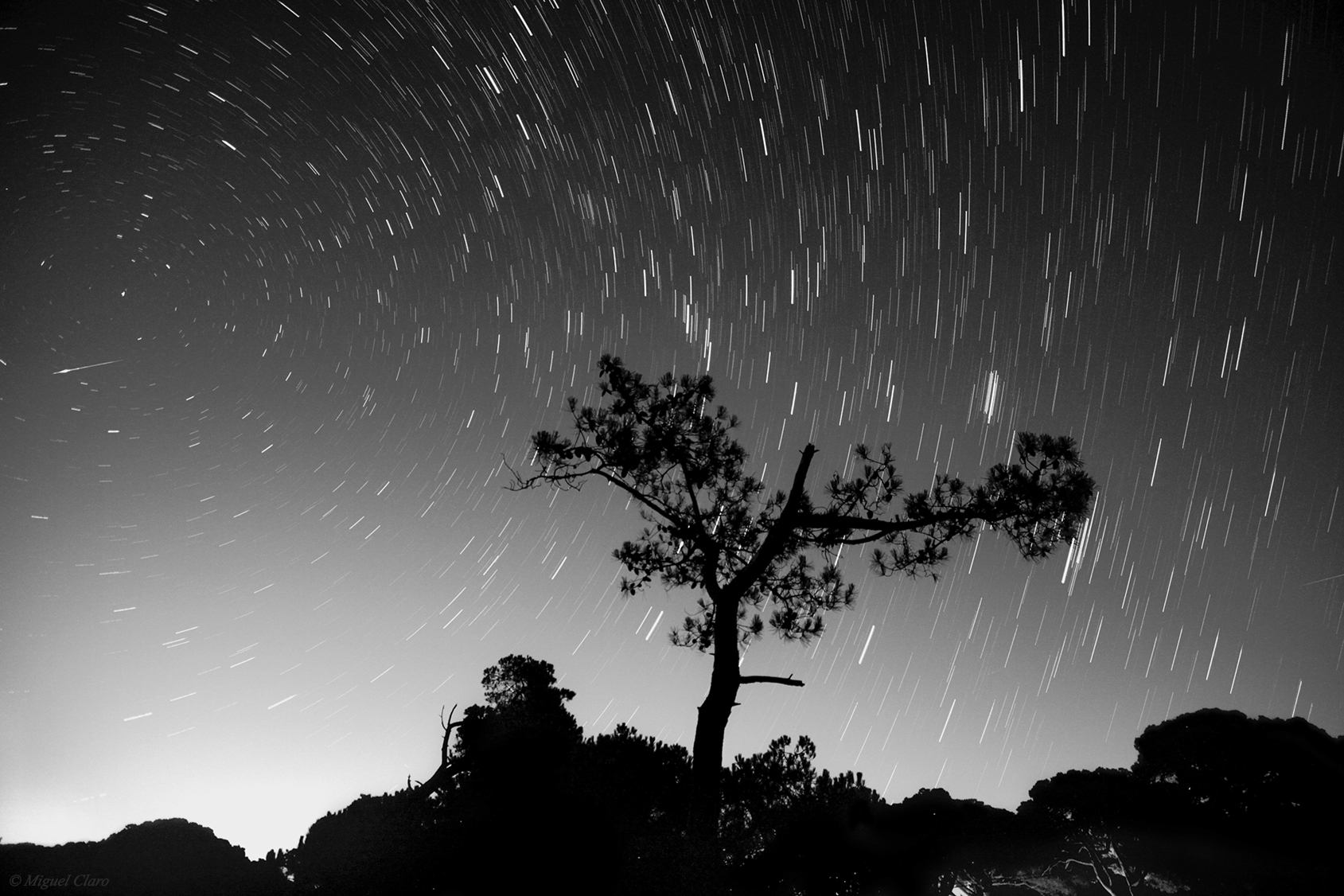 perseids meteor shower in black and white astrophotography by