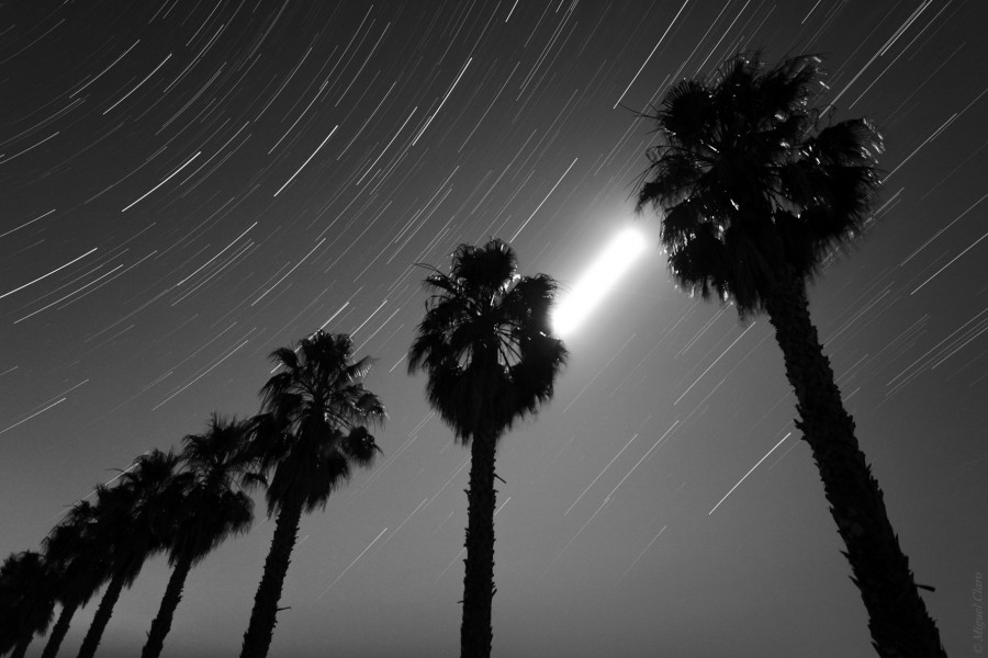 StartrailMoonPalmTrees-Monsaraz-net